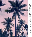 coconut trees silhouette in the ... | Shutterstock . vector #633169643