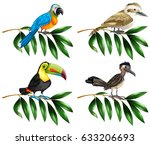 four types of wild birds on... | Shutterstock .eps vector #633206693