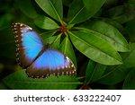 tropical nature in costa rica.... | Shutterstock . vector #633222407