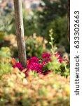 flowers in mediterranean village   Shutterstock . vector #633302663