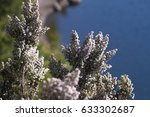 lilacs plants on lake background   Shutterstock . vector #633302687