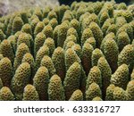Small photo of Closed up of Staghorn coral or branching coral, Acropora millepora in the Tropical sea ocean, Underwater