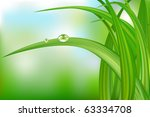 Green Grass With Water Drops O...