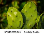 close up of some spiky cactus... | Shutterstock . vector #633395603