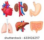 human organs anatomy  heart ... | Shutterstock . vector #633426257