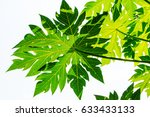closeup green leaf of papaya... | Shutterstock . vector #633433133