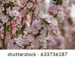 chinese flowering crab apple... | Shutterstock . vector #633736187