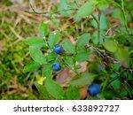 fresh bilberries on the... | Shutterstock . vector #633892727