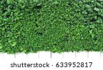 vertical garden with tropical... | Shutterstock . vector #633952817