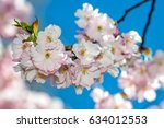 selective focus close up... | Shutterstock . vector #634012553