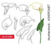 vector set with calla lily... | Shutterstock .eps vector #634091687