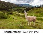 Llama  Cuzco  Peru   Circa...