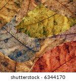 texture of autumn leaves | Shutterstock . vector #6344170