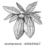 cocoa illustration  drawing ... | Shutterstock .eps vector #634654667
