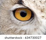 Close Up Detail Of The Eye Of...