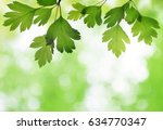 closeup of hawthorn twig with... | Shutterstock . vector #634770347