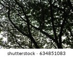 Small photo of bright sky, cloud, twig, bough, limb, Branching, True, outgrow, outgrowth, ramification, ramify,sprawl, sprawl