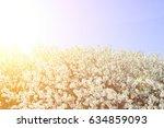 cherry blossom  japanese spring ... | Shutterstock . vector #634859093