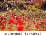 wild red poppies on the meadow... | Shutterstock . vector #634935917