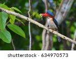 beautiful kingfisher bird  male ...   Shutterstock . vector #634970573