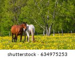 Horses On A Meadow With...