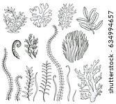 set hand drawn doodle algae.... | Shutterstock .eps vector #634994657