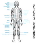 stylized anatomy diagram...   Shutterstock .eps vector #635093393