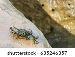 Alive Sea Crab Sitting On The...
