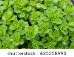 green leaf background for... | Shutterstock . vector #635258993