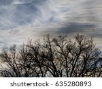 The Leafless Tree Branches...