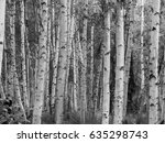 Birch Forest Abstract White...