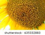 Bright Yellow Sunflowers Sun...