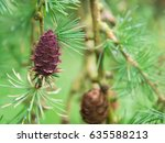 beautiful larch cones and... | Shutterstock . vector #635588213