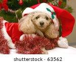 Santa Poodle