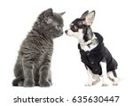 cat and chihuahua dressed...   Shutterstock . vector #635630447
