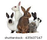 Stock photo group of rabbits isolated on white 635637167