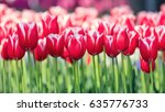 abstract floral background of... | Shutterstock . vector #635776733