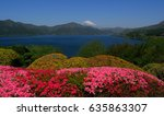 Spring Flowers And Mt. Fuji...