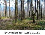 spring forest trees landscape.... | Shutterstock . vector #635866163