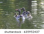 Small photo of Greylag Geese with goslings (Anser anser) - goose family on the water in Lednice castle park