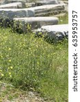 Small photo of High yellow flowers with thin caulis in sharp focus and fragments of ancient buildings blurred