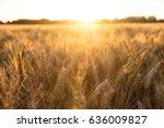 golden field of barley crops... | Shutterstock . vector #636009827