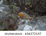 bird on a rock | Shutterstock . vector #636272147