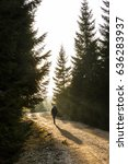 Small photo of Woman hiker walking on a mountain road, sun shining through the trees, enjoying solitude. Active lifestyle, into the wild and into the light concept.