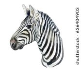 portrait of a zebra isolated on ... | Shutterstock . vector #636404903