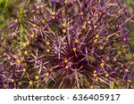 close up of blooming flower of...
