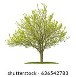 isolated golden elm tree on a... | Shutterstock . vector #636542783