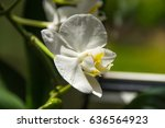 close up white orchid on blur... | Shutterstock . vector #636564923