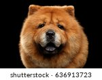 close up portrait of chow chow... | Shutterstock . vector #636913723