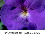 Small photo of Purple flower of achimenes macro. Achimenes has a multitude of common names such as magic flowers, widow's tears, Cupid's bower, or hot water plant.